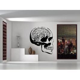 Samolepka na zeď Lebka s mozkem 1216