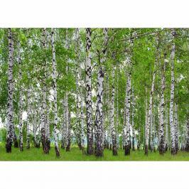 AG Art Fototapeta XXL Březový háj 360 x 270 cm, 4 díly