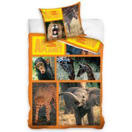 Carbotex povlečení Animal Planet - Safari 160x200 70x80, 160 x 200 cm, 70 x 80 cm