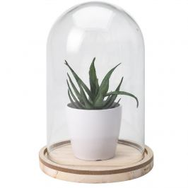 Umělá rostlina ve skle Stephania, 19 cm