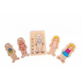 Dřevěná hračka Legler Anatomy Girl