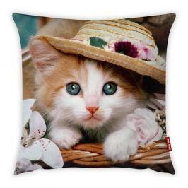 Povlak na polštář Vitaus Cute Kitten, 43 x 43 cm