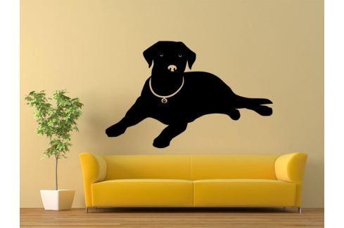 Samolepka na zeď Labrador 001 Labrador