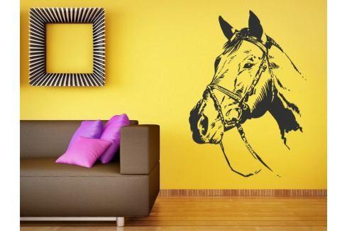Samolepka na zeď Kůň 023 Kůň