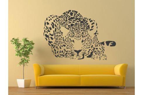 Samolepka na zeď Leopard 004 Leopard