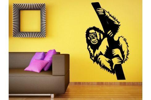 Samolepka na zeď Opice 001 Opice