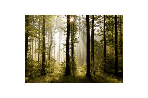AG Art Fototapeta XXL Ranní les 360 x 270 cm, 4 díly Tapety